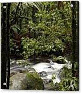 Jungle Stream Acrylic Print