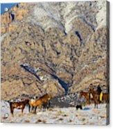 North America, Usa, Wyoming, Shell Acrylic Print