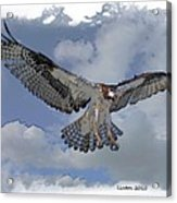 Osprey Flight Acrylic Print