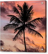 Sunset And Palm Tree Acrylic Print