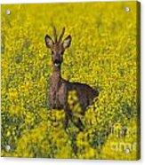110714p142 Acrylic Print