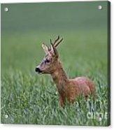 110714p320 Acrylic Print