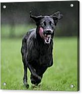 111130p196 Acrylic Print