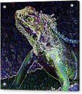 Abstract Cayman Iguana Acrylic Print