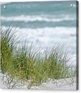 Dune Grass... Acrylic Print