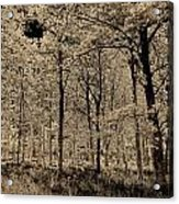 Forest Art Acrylic Print
