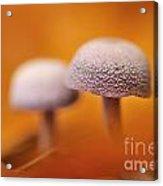 120118p035 Acrylic Print