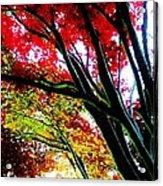 12032013003 Acrylic Print