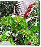 Barriles Flower Acrylic Print