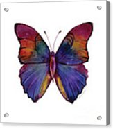 13 Narcissus Butterfly Acrylic Print