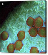 Rubella Virus Acrylic Print