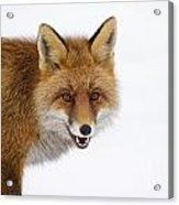 130201p058 Acrylic Print