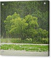 1307-4983 Rainy Lake Ludwig Acrylic Print by Randy Forrester