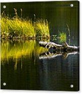 131005b-029 Forest Pond 2 Acrylic Print