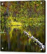 131005b-052 Forest Marsh 2 Acrylic Print