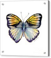 14 Pieridae Butterfly Acrylic Print