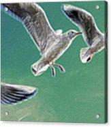 10760 Seagulls In Flight #001 Photo Painting Acrylic Print