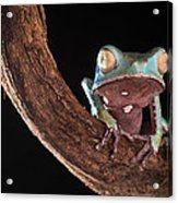 Tree Frog Acrylic Print