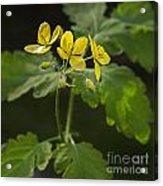 140420p133 Acrylic Print