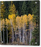 Guardians Of Trestle Creek  -  141102a-138 Acrylic Print