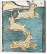 1491 Sea Hares From Hortus Sanitatis Acrylic Print