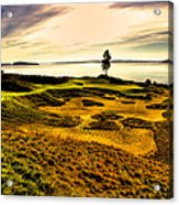 #15 At Chambers Bay Golf Course  Acrylic Print by David Patterson