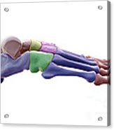 Foot Bones Acrylic Print
