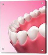 Human Teeth Acrylic Print