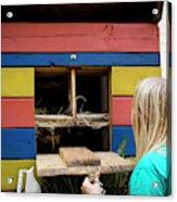 A Backyard Chicken Coop In Austin Acrylic Print