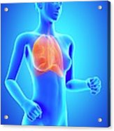 Female Lungs Acrylic Print
