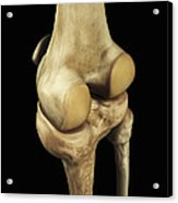 Knee Bones Right Acrylic Print