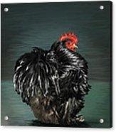 17. Black Frizzle Cochin Bantam Acrylic Print