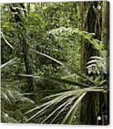 Jungle Leaves Acrylic Print
