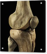 Knee Bones Right Acrylic Print
