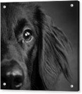 Portrait Of A Mixed Dog Acrylic Print
