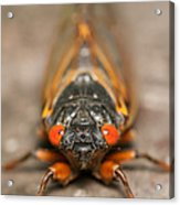 17-year Periodical Cicada IIi Acrylic Print