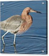 Birds Of The World Acrylic Print