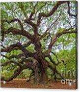 Southern Angel Oak  Acrylic Print