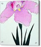 Japanese Flower Acrylic Print