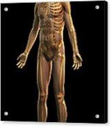 The Skeleton Acrylic Print
