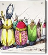 1842 Caricature Coloured Church Beetles Acrylic Print