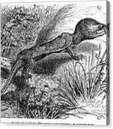 1892 Art Print Engraving Animal Big-headed Turtle By G Muetzel Acrylic Print