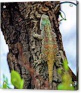 African Reptiles Acrylic Print
