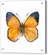 19 Delias Anuna Butterfly Acrylic Print