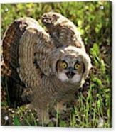 Nature And Wildlife Acrylic Print