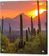 Usa, Arizona, Saguaro National Park Acrylic Print