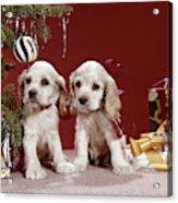 1960s Two Cocker Spaniel Puppies Acrylic Print