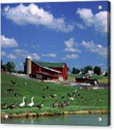 1990s Amish Family Farm Bunker Hill Acrylic Print