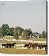 1990s Small Group Of Horses Acrylic Print