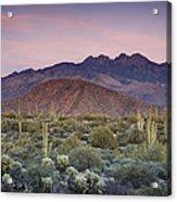 A Desert Sunset  Acrylic Print